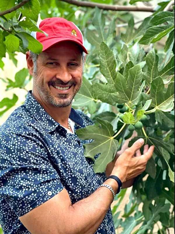 Sam Mustafa Fig Plant